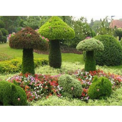 植物編織工藝品