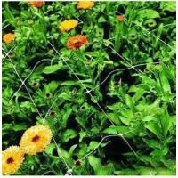 植物爬藤网
