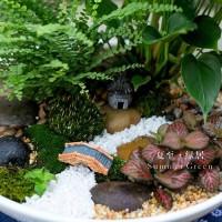 花艺珍珠岩4