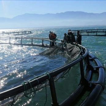 魚世界養魚網箱廠家直銷 抗風浪養殖網箱 網箱養殖配件齊全