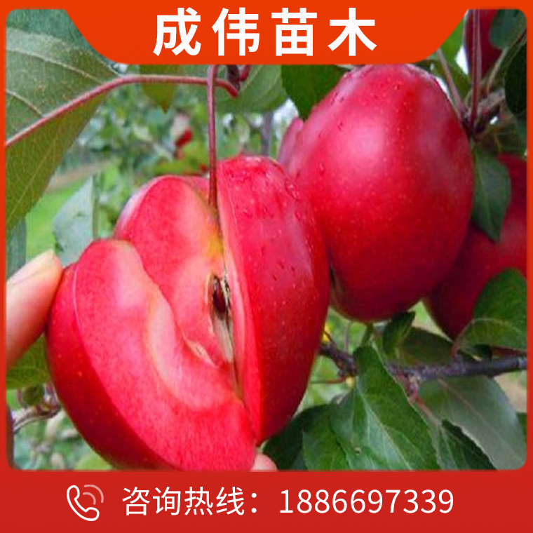 優質樹苗生產商