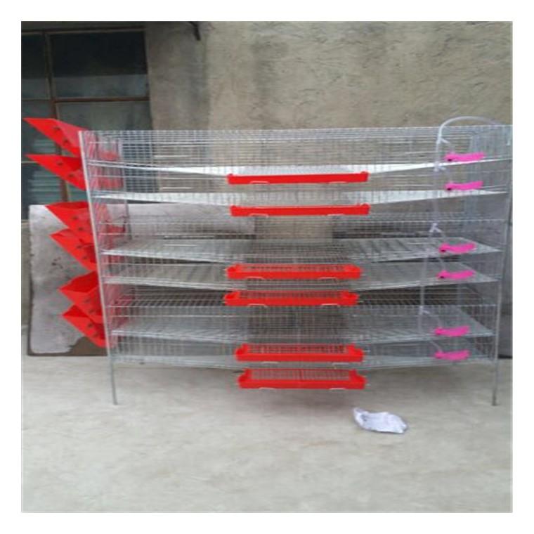 新型立式鵪鶉養殖籠具廠家