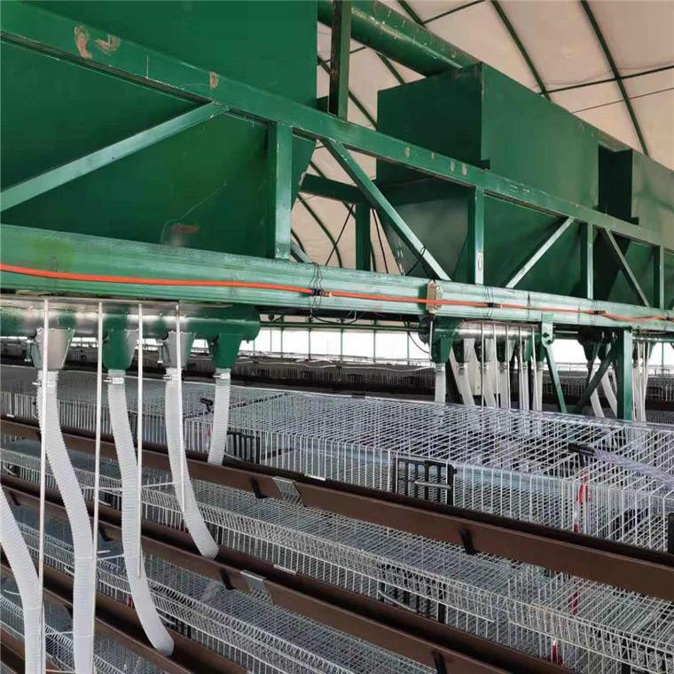 鵪鶉籠具生產廠家