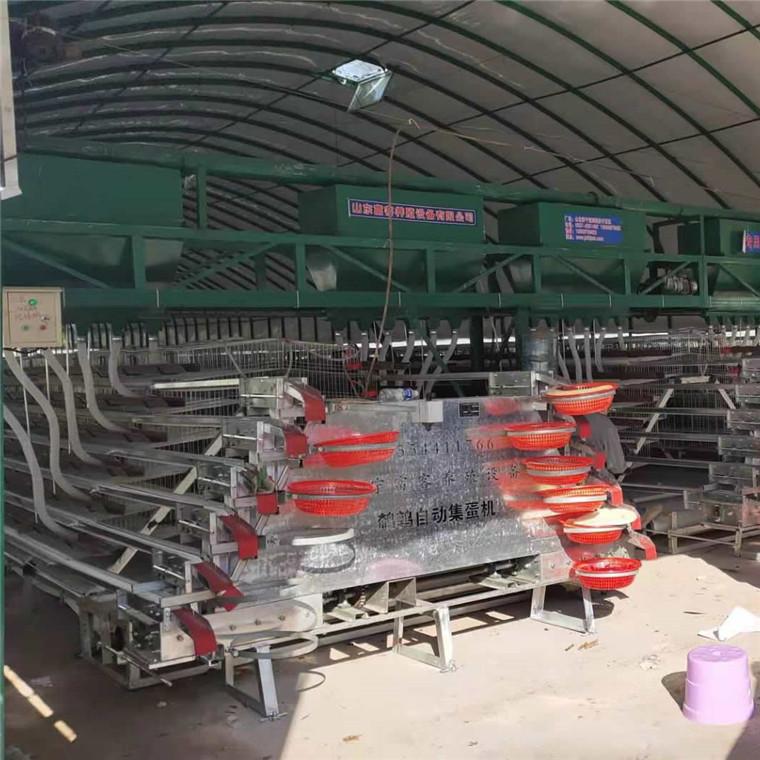 鵪鶉養殖籠具設備