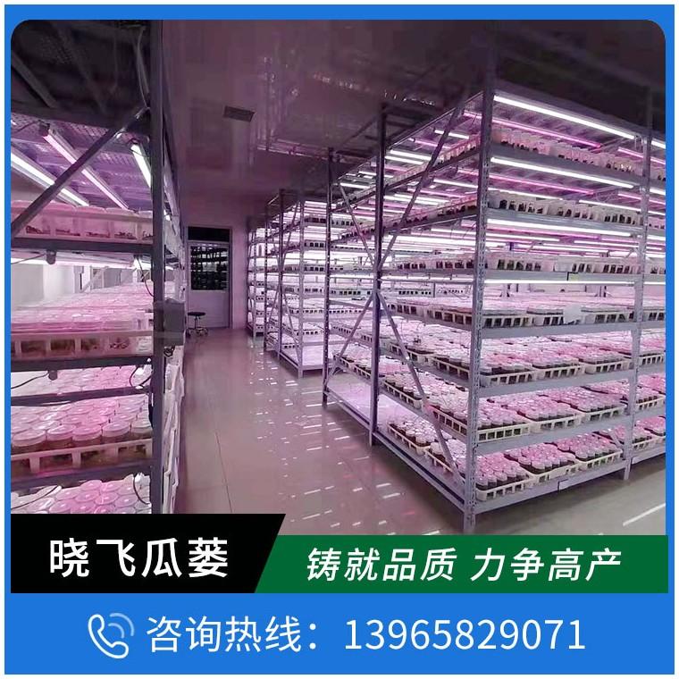 瓜蔞種苗價格