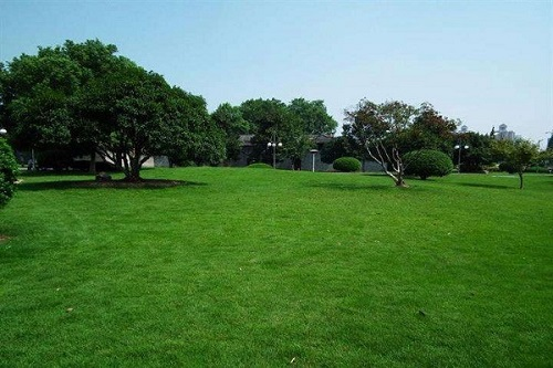 青島混播草坪