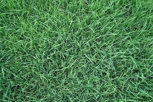 山西草坪種植