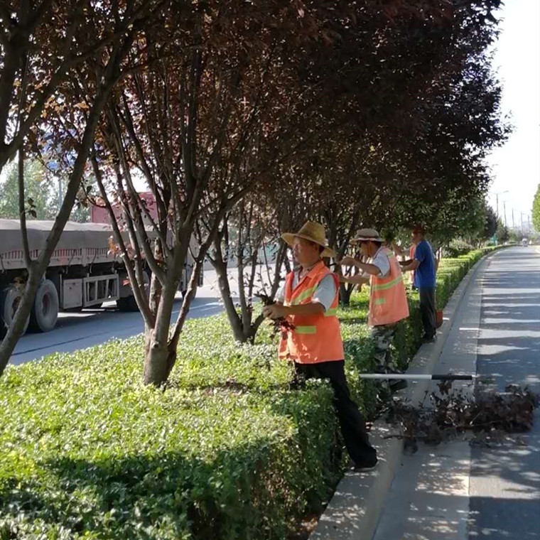 小區綠化維護