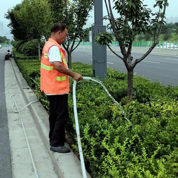 馬路綠化養護