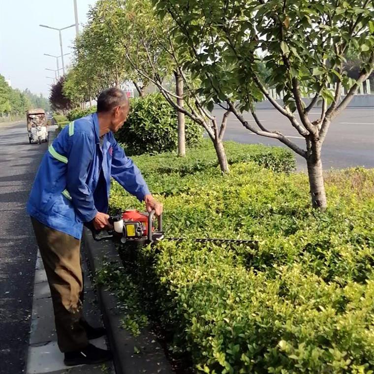 洛陽道路綠化維護