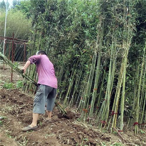洛陽洛龍區綠化養護