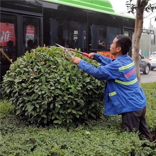 洛陽維護綠化